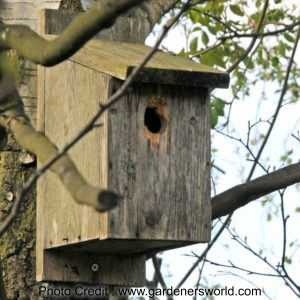 Attract birds with a bird box