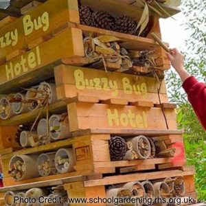 Attract insects with a bug hotel