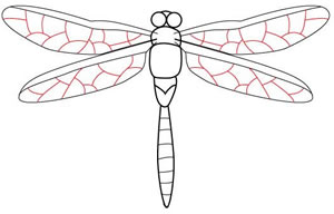 Learn To Draw A Dragonfly