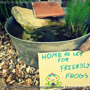 Attract Frogs With A Mini Pond
