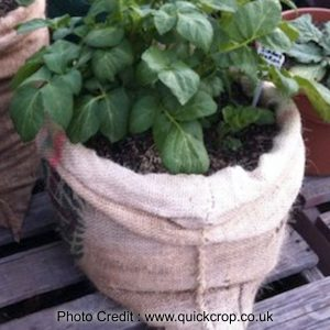 Growing Potatoes In A Bag from Quick Crop