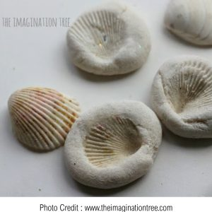 Salt Dough Fossils from The Imagination Tree