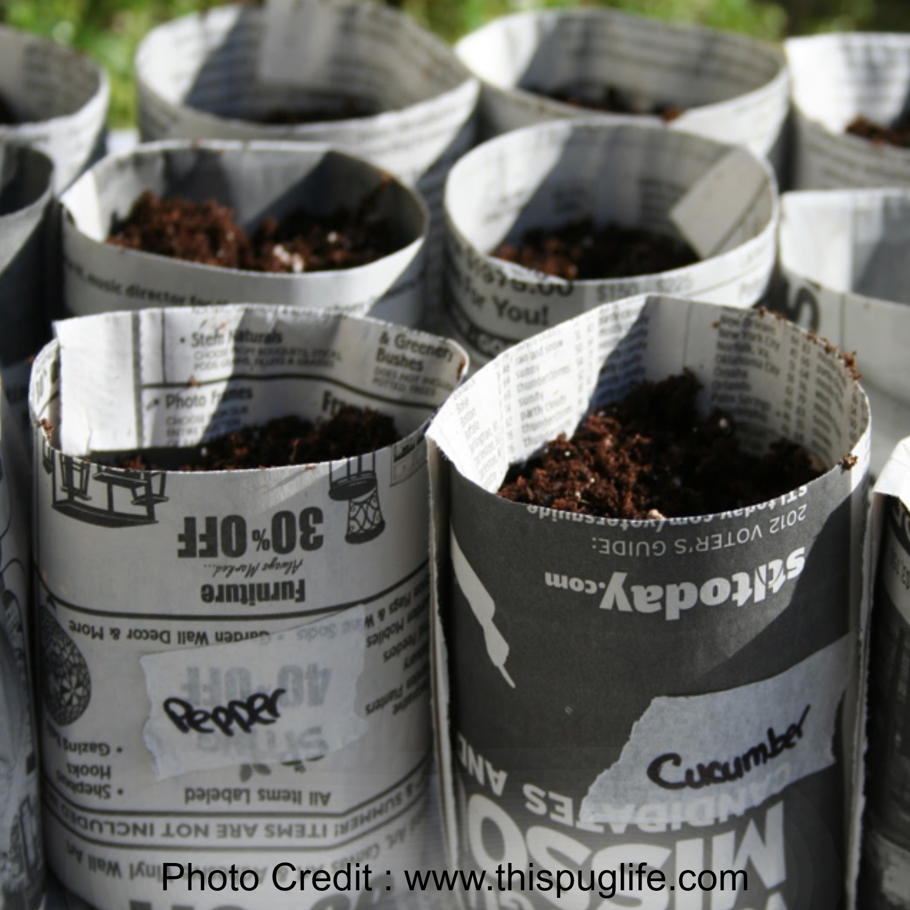 Newspaper Seed Pots from This Pug Life
