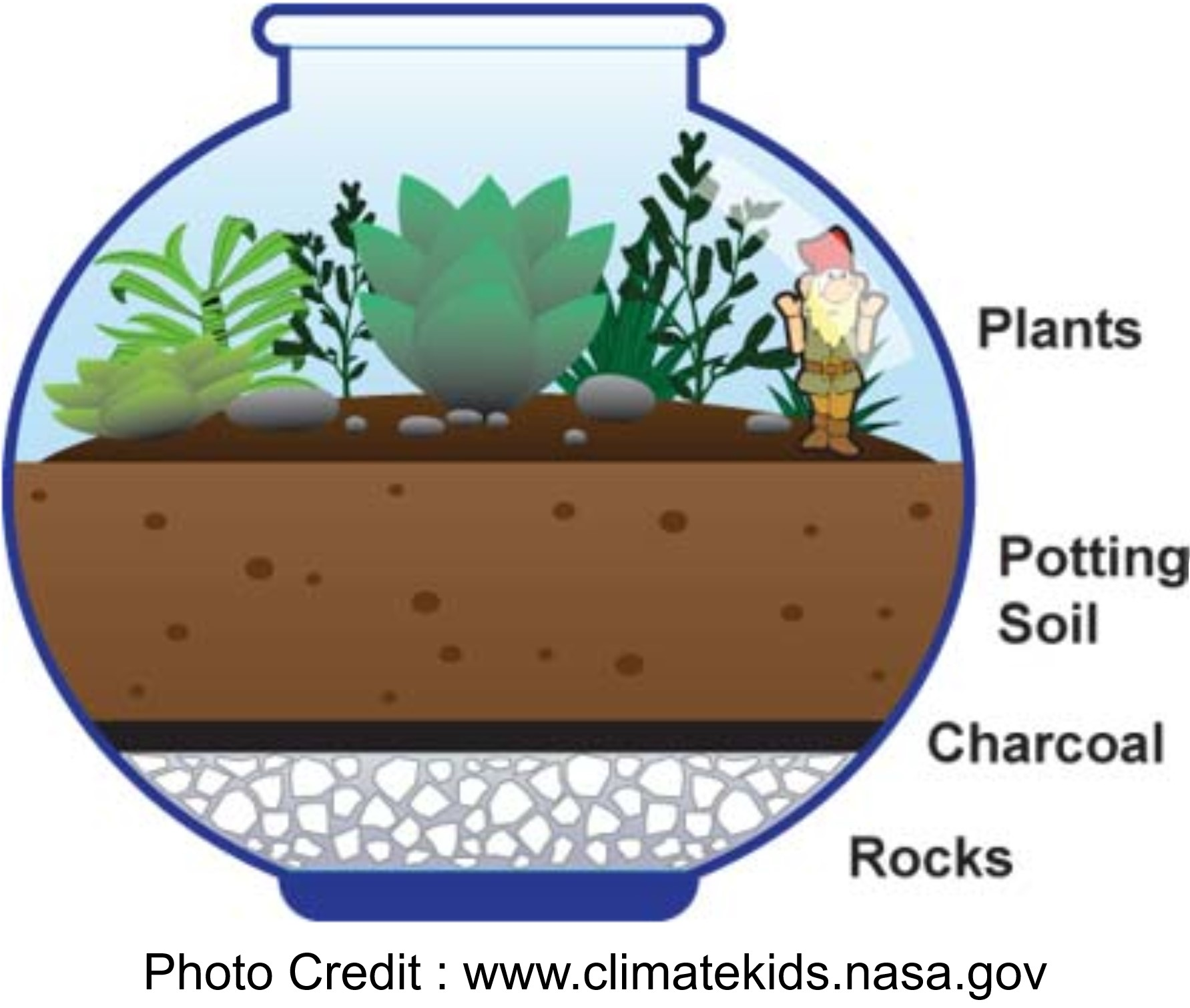 Make A Terrarium from Climate Kids NASA