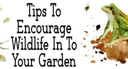 Tips To Help Encourage Wildlife In To Your Garden
